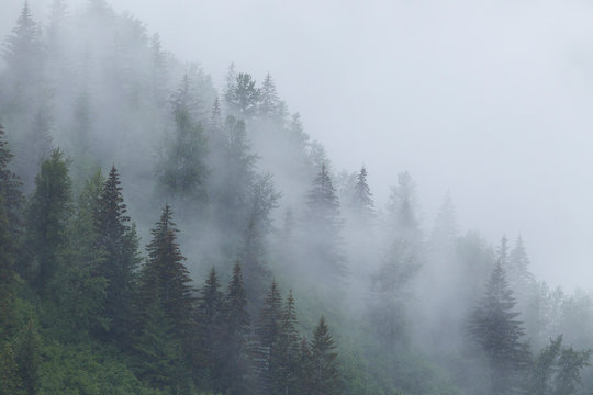 Alaska, Glacier Bay National Park. Fog shrouds trees on steep slopes in the Tongass National Forest.