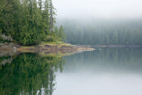 USA, Alaska, outside of Ketchikan in Southeast Alaska.