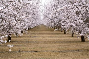 USA, California, Merced Co. Irrigation lines provide water for almond orchards near Santa Nella, California.