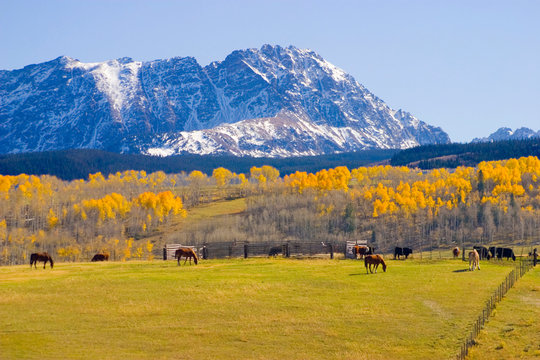 USA, Colorado, Summit County, Shadow Mountain Ranch. Horses grazing in idyllic autumn setting.