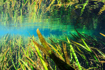 Underwater photograph showing the clear waters, seagrass beds and surface reflections on the Itchetucknee River, Florida.