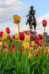 Boston, Massachusetts, USA. George Washington Statue with Tulips in the foreground. Boston Public Garden.