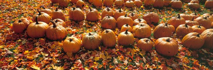 USA, Massachusetts, Shelburne Falls. A roadside stand sells golden pumpkins near Shelburne Falls, in western Massachusetts.