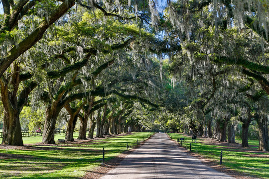 Boone Hall Plantation Oak lined road, Charleston, South Carolina