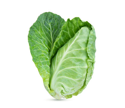 fresh green pointed cabbage isolated on white background