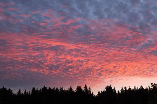 USA, Wisconsin. Sunset with alto cumulus clouds and silhouetted treeline.