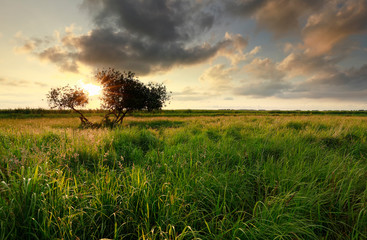 Wall Mural - golden sunset sunlight over meadow and tree