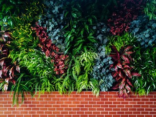 Beautiful green plant wall background. Horizontal picture of garden with dense vegetation