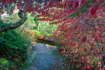 Autumn park alley with colorful red foliage on the trees and path