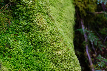 Close up of tree trunk covered with green soft moss