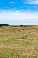 Large round bales of straw on a field