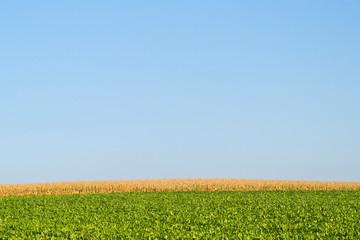 Farmland against Clear Blue Sky