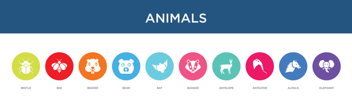 animals concept 10 colorful icons