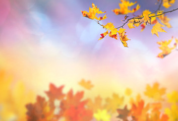 an autumn leaves background