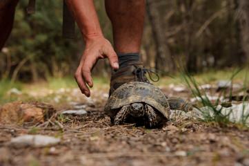 Tortoise walks in a forest near human Wall mural