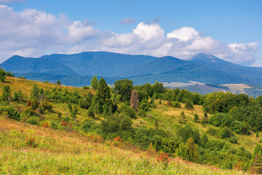 wonderful autumn mountain landscape. pikui peak of watershed ridge beneath clouds. trees on grassy rolling hills. wonderful carpathian countryside on a sunny day of september.