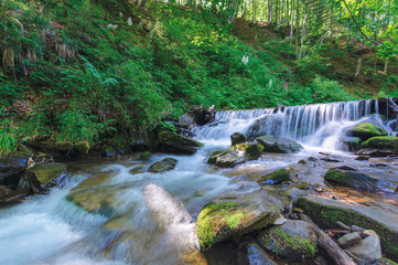 forest stream with cascade and mossy rocks. beautiful summer scenery on sunny morning. long exposure of water flow. green plant on the shore of Shypot creek near pylypets village, transcarpathia, UA