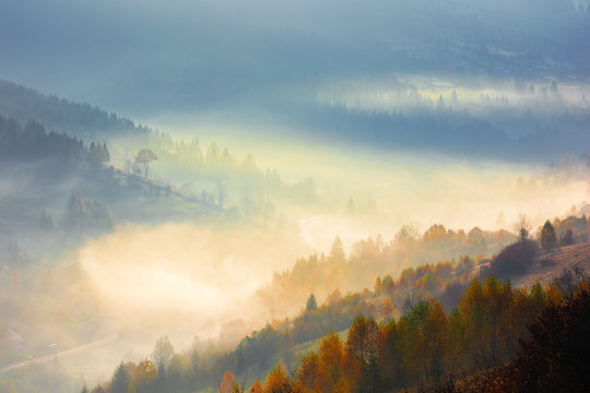 glowing fog in the morning. beautiful scenery of nature phenomenon in autumn at sunrise. trees on the hill in fall colors. majestic view from the top of a mountain