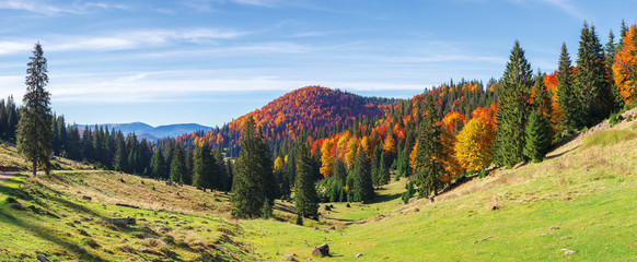 apuseni natural park in autumn. amazing morning panorama of varasoaia meadow, bihor, romania. forest on the mountain in fall color. spruce trees in the valley. sunny weather with high clouds.