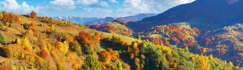 wonderful autumn panorama in mountains. trees in fall colorful foliage on the hill. clouds on the blue sky above the distant ridge. wonderful october afternoon weather. amazing carpathians