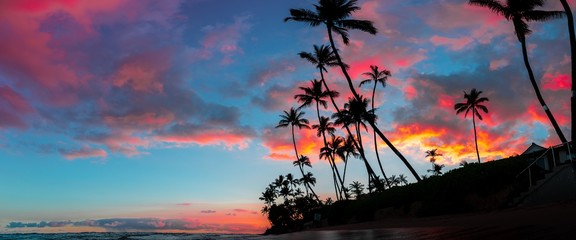 Beautiful panorama of tall palm trees and amazing breathtaking red and purple clouds in the sky
