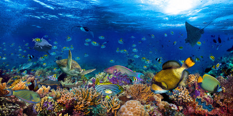 underwater coral reef landscape wide 2to1 panorama background  in the deep blue ocean with colorful...