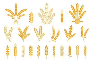 Wheat and rye ears. Oats barley rice spikes and grains, heraldic elements for beer and bread logo. Vector symbol stalk and seed food isolated collection