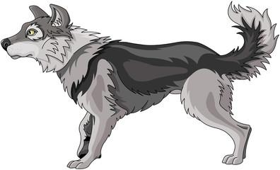 Foto op Canvas Sprookjeswereld Wolf