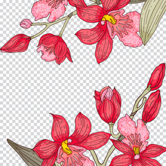 Tender orchid vector square template for social networks