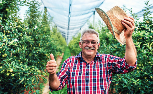 Orcharding. Happy farmer standing in the orchard and showing thumb up. Agricultural concept