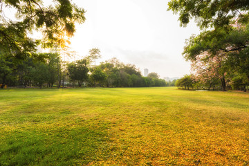 Green sward filed in morning, Scenery green grass at the natural park