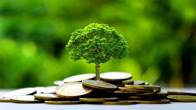 Small trees on a pile of gold coins and a natural green background. Money saving ideas.
