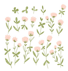Pink clover flowers isolated on the white background.  Vector floral set. Cute hand-drawn natural elements for design cards and invitations.