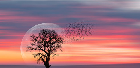 Wall Mural - Silhouette of birds with lone tree in the background big full moon at amazing sunset