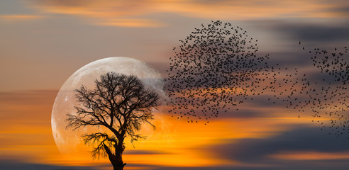 Photo sur Aluminium Arbre Silhouette of birds with lone tree in the background big full moon at amazing sunset