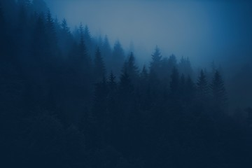 Wall Mural - Foggy Forest Scenery