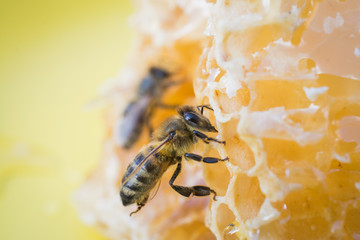 Fototapeten Bienen slices of fresh honey with bee