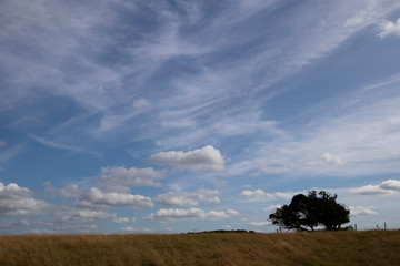 Silhouetted windswept stunted tree on farm grassland field in rural Hampshire against a cloudy sky