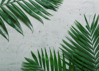 gray background with leaves of tropical plants