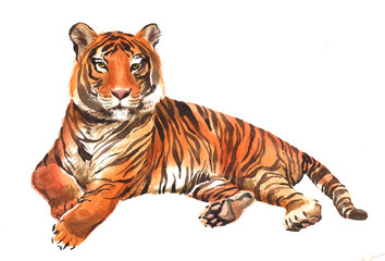 Watercolor single tiger animal isolated on a white background illustration. Wall mural