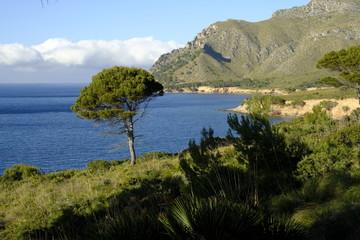 Landschaft und Steilküste bei Betlem auf der Halbinsel Llevant im Naturpark Llevant, Mallorca, Balearen, Spanien