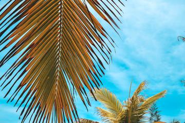 Palms and sky background. China, Hainan island, Sanya.