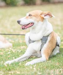 Portrait Hund im Gras