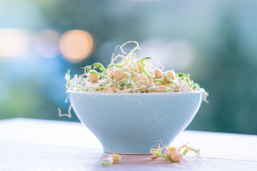 Germinated seeds for salad. Seeds For Salad Sprouts