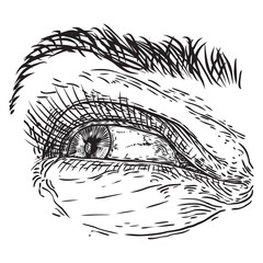 Hand drawn woman eye with iris, eyebrows and full lashes. Makeup salon design element. Vector.