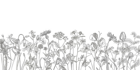Collection of hand drawn flowers and herbs. Botanical plant illustration. Vintage medicinal herbs sketch set of ink hand drawn medical herbs and plants sketch Wall mural