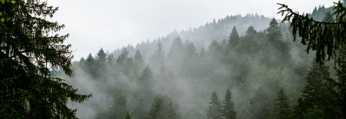 Coniferous forest in morning fog (mist), breathing mountains. Freshness and mystery. Fototapete