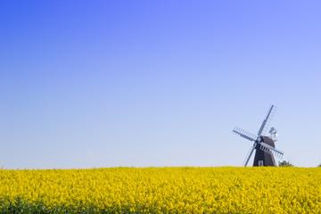 Windmühle Fotoväggar