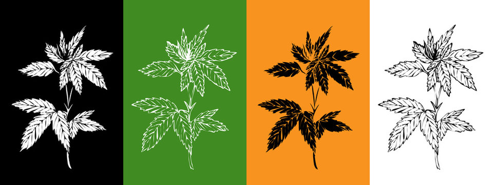 Vector set with hemp plant. Isolated cannabis leaves.