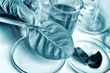 Scientist with natural drug research, Natural organic botany and scientific glassware, Alternative...